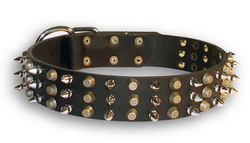 Stylish wide leather collar with pyramids and spikes for Doberman