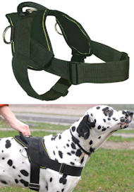 Best Dog Training Harness for DOBERMAN