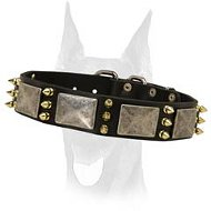 The best spiked leather collar with massive nickel plates for your Doberman
