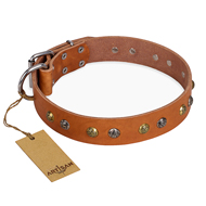 'Golden'n'Silver Luxury' FDT Artisan Leather Doberman Collar with Engraved Studs