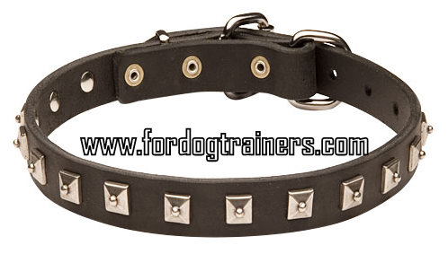 Perfect leather Doberman collar for training and walking