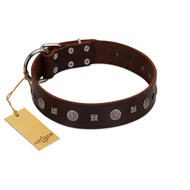 """Pure Sensation"" Exclusive FDT Artisan Brown Leather Doberman Collar with Fancy Brooches and Studs"