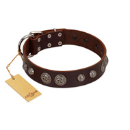 """Choco Brownie"" FDT Artisan Brown Leather Doberman Collar Adorned with Silver-Like Conchos"