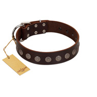 """Starry-Eyed"" Best Quality FDT Artisan Brown Designer Leather Doberman Collar with Small Plates"