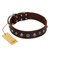 """Dark Chocolate"" Handmade FDT Artisan Brown Leather Doberman Collar with Studs"