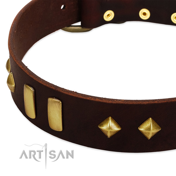 Reliable leather dog collar with inimitable decorations