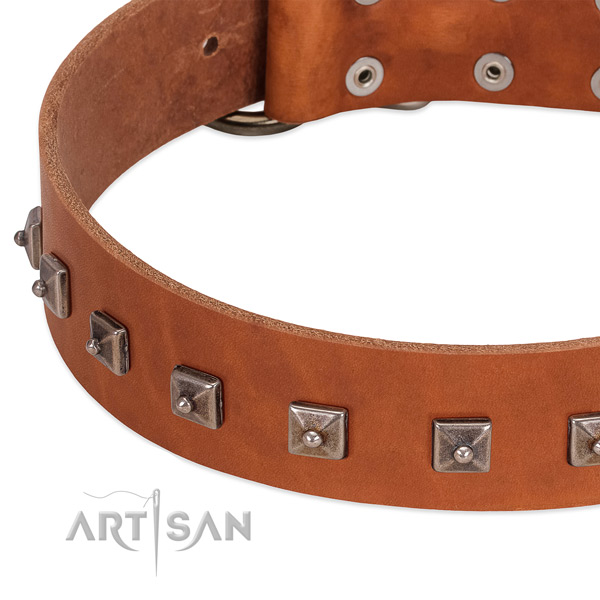 Reliable leather dog collar with stylish decorations
