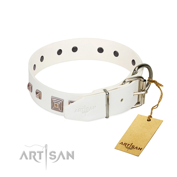 Awesome collar of full grain leather for your handsome four-legged friend