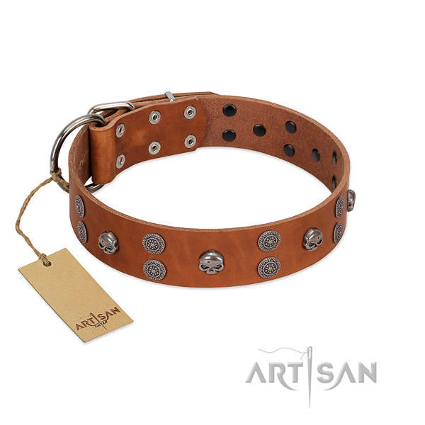 Quality natural leather dog collar with studs for easy wearing