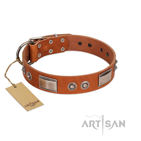 Remarkable leather collar with studs for your pet