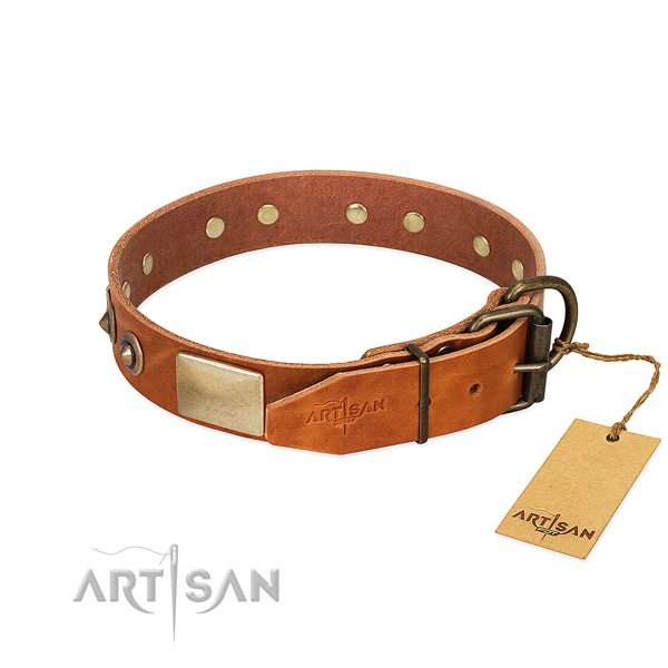 Rust resistant decorations on walking dog collar