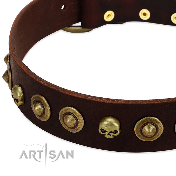 Remarkable embellishments on full grain leather collar for your doggie