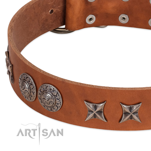 Adorned leather dog collar with rust resistant buckle