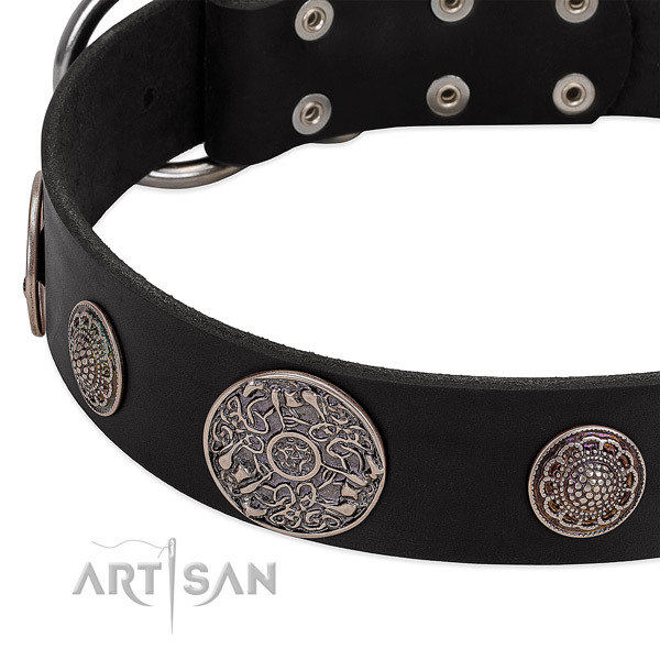 Strong adornments on full grain leather dog collar