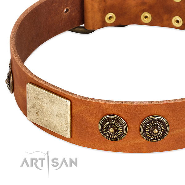 Exceptional dog collar handmade for your impressive dog