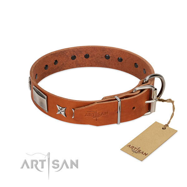 Studded dog collar of natural leather