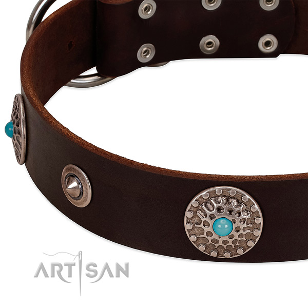 Studded collar of full grain natural leather for your lovely canine