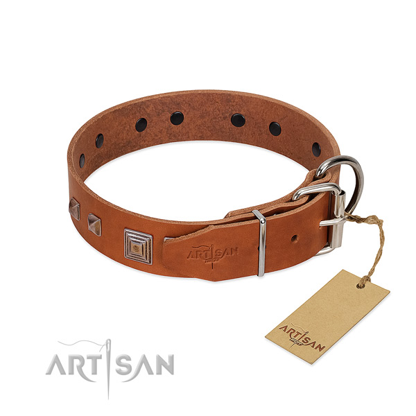 Stylish walking full grain natural leather dog collar with unique embellishments