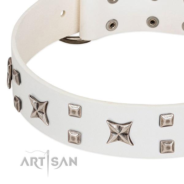 Best quality full grain leather dog collar with studs for walking
