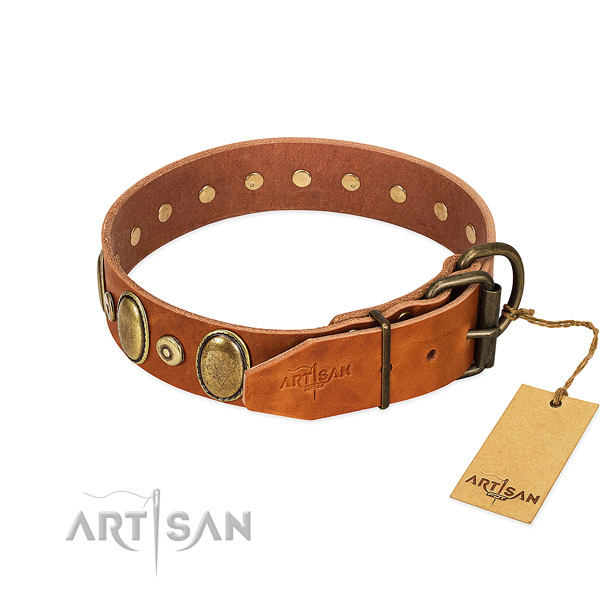 Rust resistant buckle on everyday walking collar for your doggie