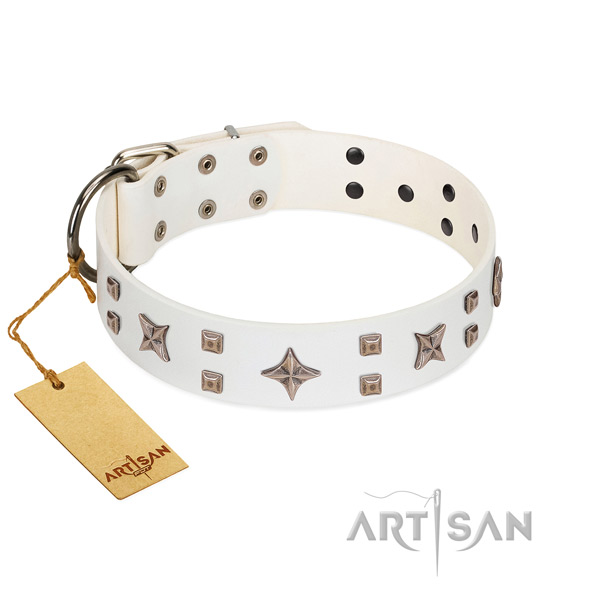 Everyday walking full grain leather dog collar with amazing studs