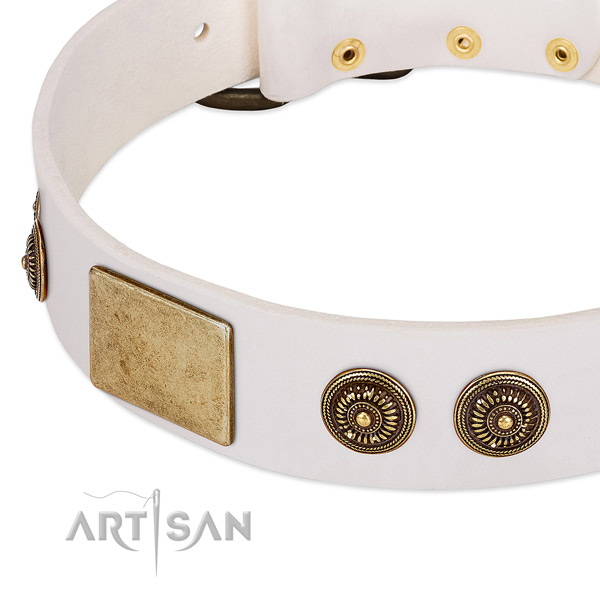 Incredible dog collar made for your stylish doggie