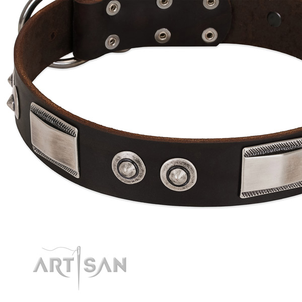 Incredible genuine leather collar for your dog