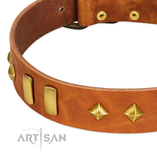 Daily use full grain leather dog collar with extraordinary decorations