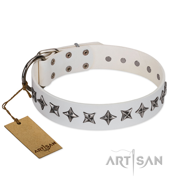 Daily use dog collar of top notch full grain natural leather with decorations