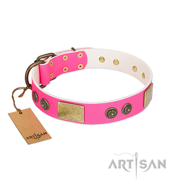 Exceptional leather dog collar for walking