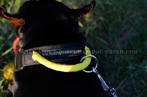 Easy to wash Doberman collar