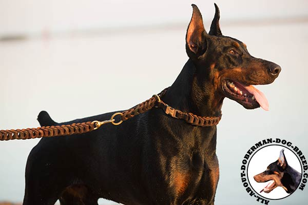 Leather choke Doberman collar for everyday walking