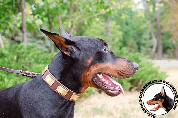 Wide leather Doberman collar with brass plates