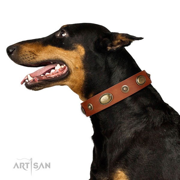 Basic training dog collar of natural leather with awesome adornments