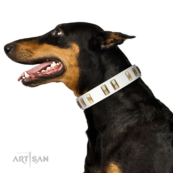 Full grain leather dog collar with exceptional adornments for everyday walking