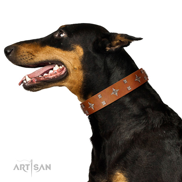 Full grain natural leather dog collar of top notch material with fashionable embellishments