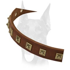 Best studded leather collar