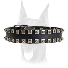 No-ordinary design collar for Doberman