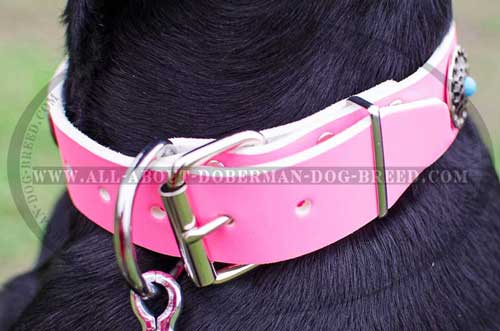 Strong leather collar with rust resistant D-ring