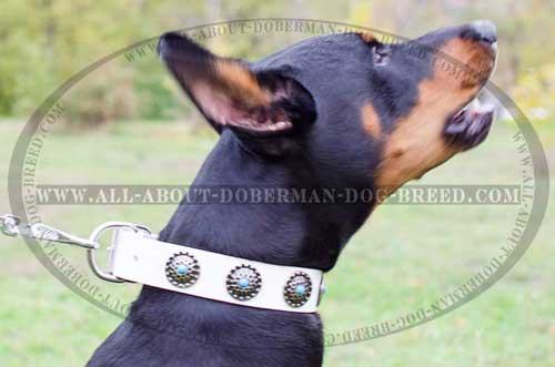 Awesome blue stones for Doberman collar