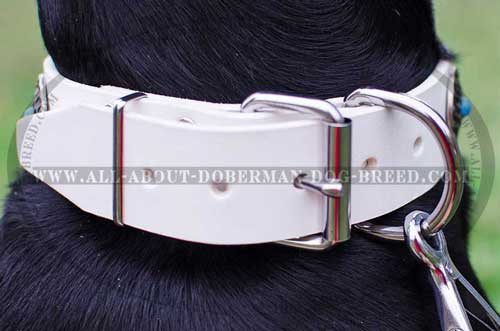 Rust proof nickel fittings for Doberman collar
