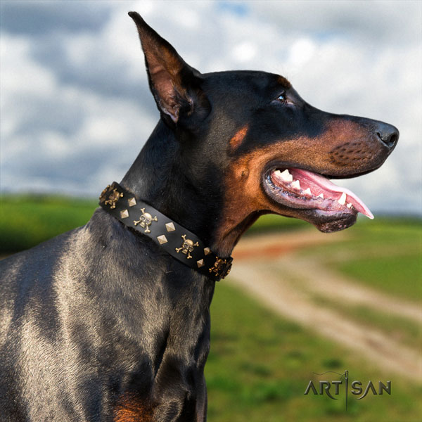 Doberman full grain natural leather dog collar with embellishments for your lovely dog
