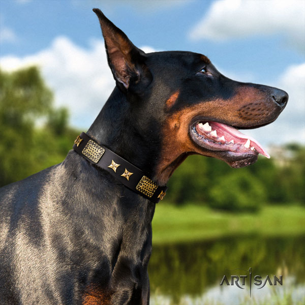 Doberman full grain leather dog collar with studs for your stylish dog