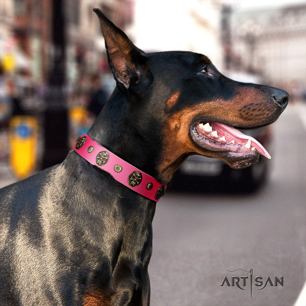 Doberman everyday walking leather collar with adornments for your dog