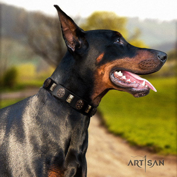 Doberman daily walking leather collar with embellishments for your dog