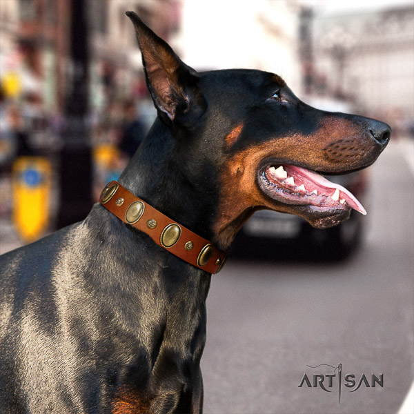 Doberman handy use full grain natural leather collar with adornments for your canine