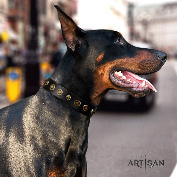 Doberman handy use full grain genuine leather collar with embellishments for your four-legged friend