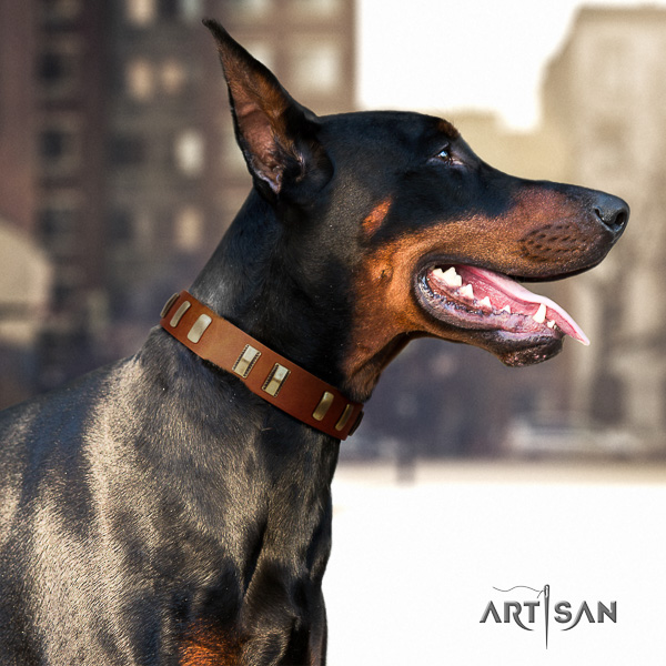 Doberman basic training genuine leather collar with studs for your dog
