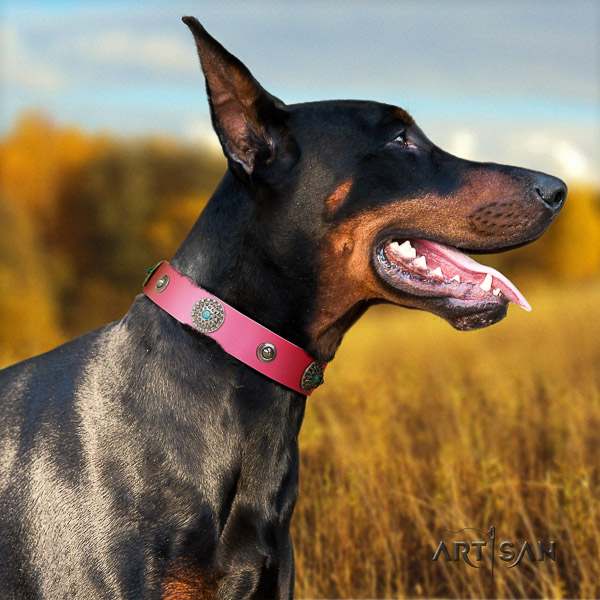Doberman daily walking full grain leather collar with remarkable embellishments for your pet