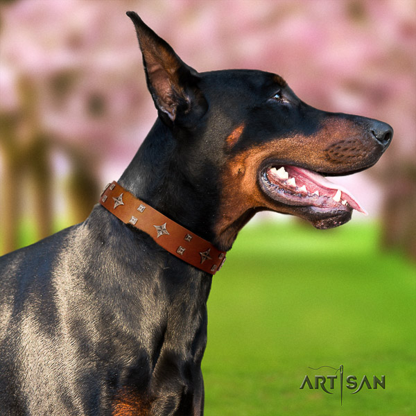 Doberman basic training natural leather collar with stylish design studs for your four-legged friend